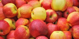 Україна встановила рекорд з експорту яблук - today.ua