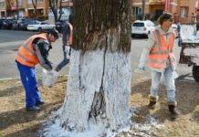У кабміні закликають не білити дерева та бордюри - today.ua