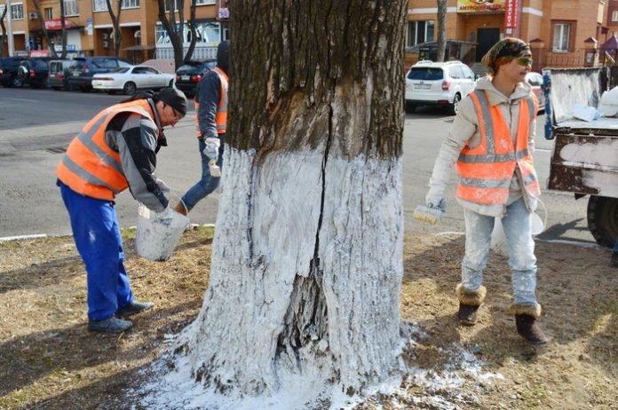 """Результат пошуку зображень за запитом """"білити бордюри і дерева"""""""