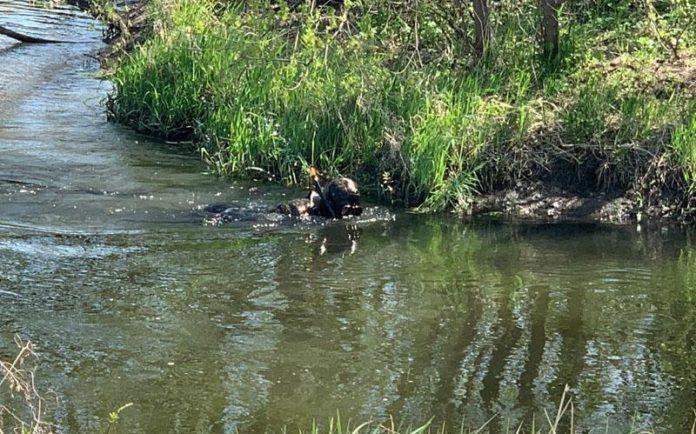 На Донеччині пенсіонер застрелив злодія, а тіло скинув у річку - today.ua