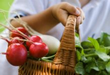В Украине рекордно рухнули цены на ранние овощи - today.ua