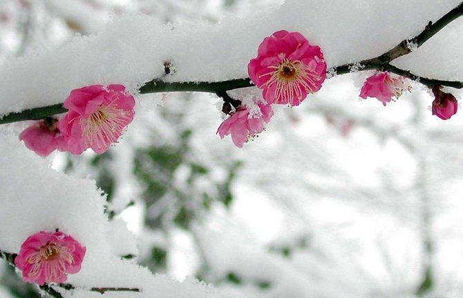 Україну накриють заморозки, – Укргідрометцентр