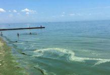 Чорне море раптово позеленіло: туристам зробили попередження - today.ua