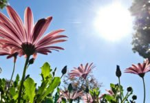 Синоптики розповіли про погоду на літо: детальний прогноз - today.ua