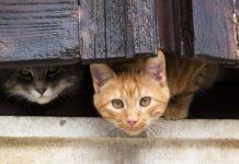 """Львов стал первым в мире городом, где провели """"перепись"""" бездомных котов - today.ua"""