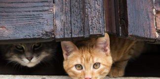 """Львів став першим у світі містом, де провели """"перепис"""" безпритульних котів - today.ua"""
