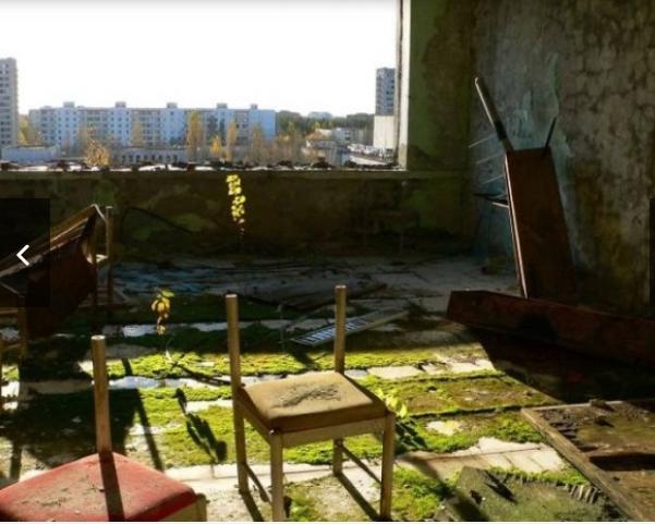 Чорнобиль відроджується: у мережі з'явилися вражаючі знімки природи у Зоні відчуження