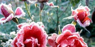 "Прийдуть перші заморозки: Синоптики приголомшили прогнозом на серпень"" - today.ua"
