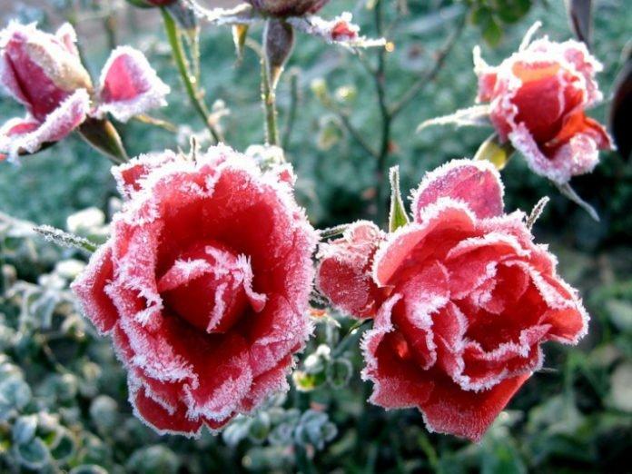 Прийдуть перші заморозки: Синоптики приголомшили прогнозом на серпень