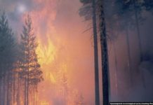 В России решили бороться с масштабным лесным пожаром с помощью молитв - today.ua