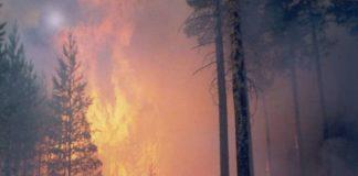 В Росії вирішили боротись з масштабною лісовою пожежою за допомогою молитов - today.ua
