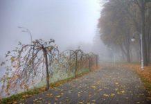 Прогноз погоды на ближайшие дни: синоптики обещают тепло - today.ua