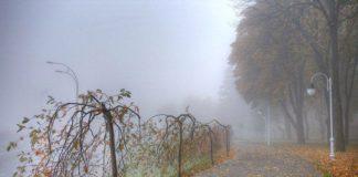 Прогноз погоди на найближчі дні: синоптики обіцяют тепло - today.ua