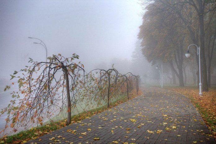 Погода на 14 листопада: синоптики розповіли, де в Україні буде найтепліше - today.ua