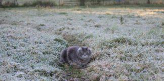 Сильні дощі і заморозки вночі: якою буде погода цього тижня - today.ua