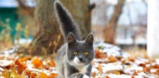 Сніговий листопад і тепла зима: синоптики здивували прогнозом погоди - today.ua