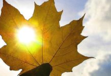 Останні теплі вихідні: синоптики дали прогноз погоди на тиждень - today.ua