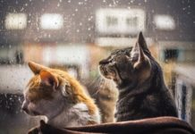 Погода на 29 жовтня: в Україну прийшла холодна осінь - today.ua