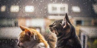 """Погода на 29 жовтня: в Україну прийшла холодна осінь"""" - today.ua"""