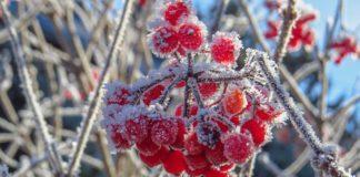 Коли очікувати заморозків: синоптики дали прогноз погоди на найближчий тиждень - today.ua