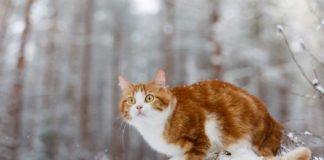 Якою буде зима: синоптики дали прогноз - today.ua