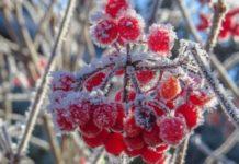Прогноз погоди: синоптики попередили про нічні заморозки - today.ua