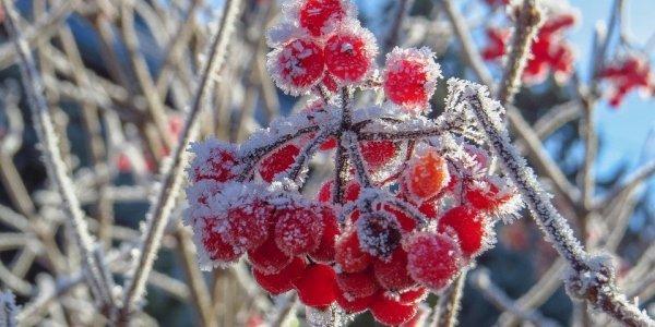 Прогноз погоды: синоптики предупредили о ночных заморозках - today.ua