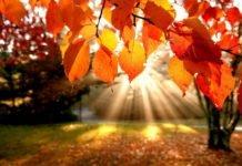 Найтепліший день: синоптики потішили прогнозом погоди на 15 жовтня - today.ua