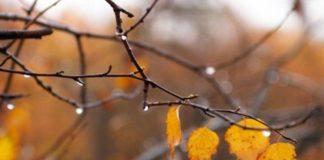 4 листопада: яке сьогодні свято і день ангела - today.ua