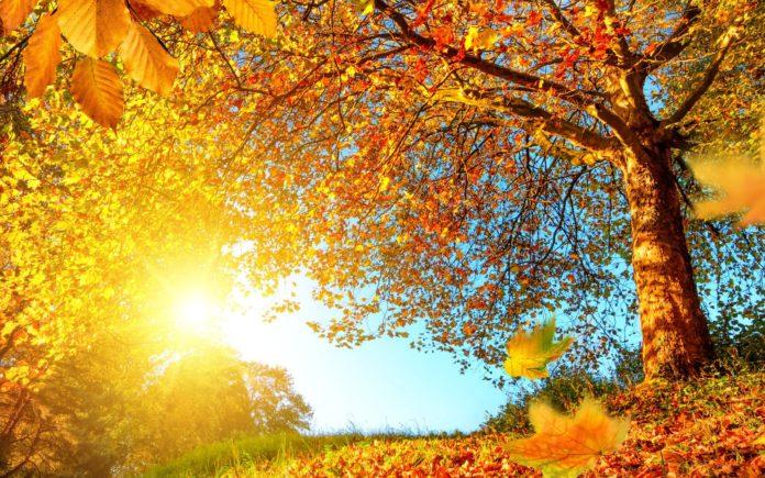 По-летнему тепло: синоптики рассказали, какой будет погода в воскресенье - today.ua