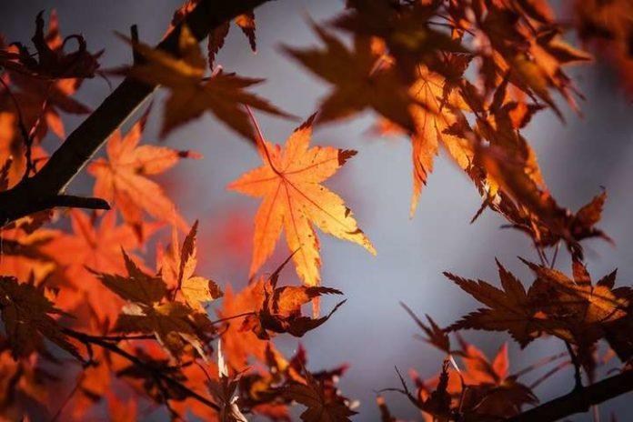 Погода на завтра: синоптики обещают похолодание - today.ua