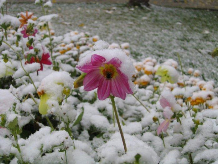 Дощ і мокрий сніг: Синоптики засмутили українців - today.ua