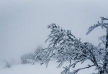 Украинские Карпаты уже заметает снегом (видео) - today.ua