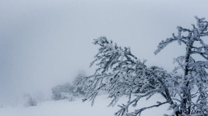 Українські Карпати вже замітає снігом (відео) - today.ua