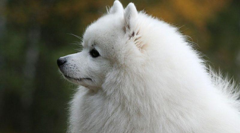 ТОП-5 пород собак для семей с детьми