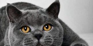 """ТОП-3 породы кошек для семей с детьми"""" - today.ua"""