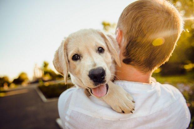 Як собаки лікують від хвороб і продовжують життя господарям