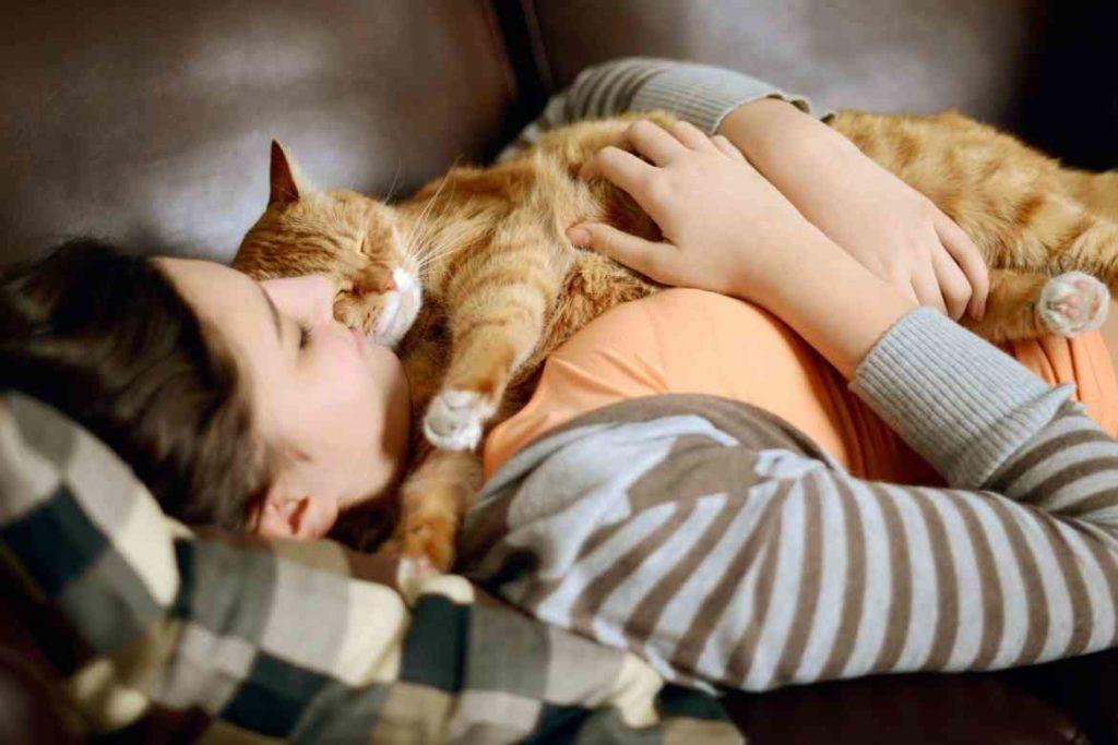 Как кошки лечат болезни и снимают стресс: уникальные факты