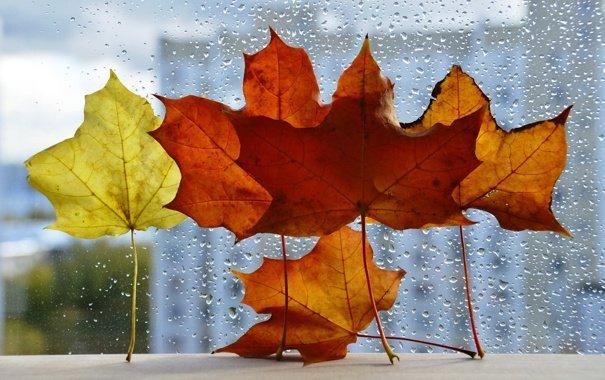 Сыро и ветрено: синоптики дали прогноз на 5 ноября - today.ua