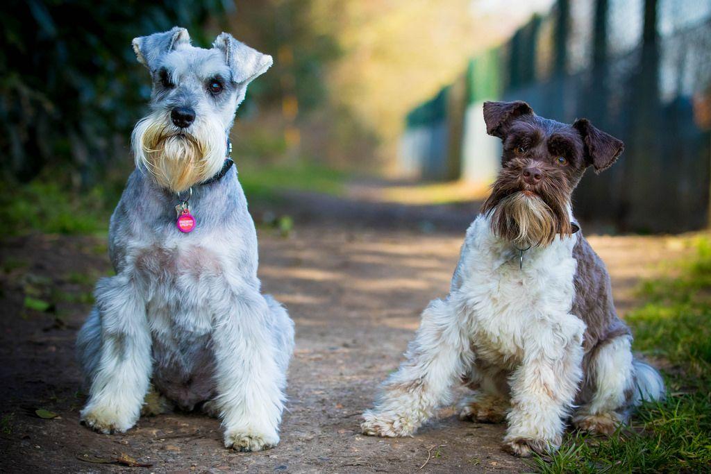 Лучшие породы собак для каждого знака зодиака