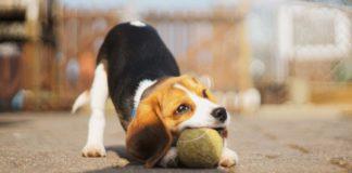 ТОП-5 самых умных пород собак - today.ua