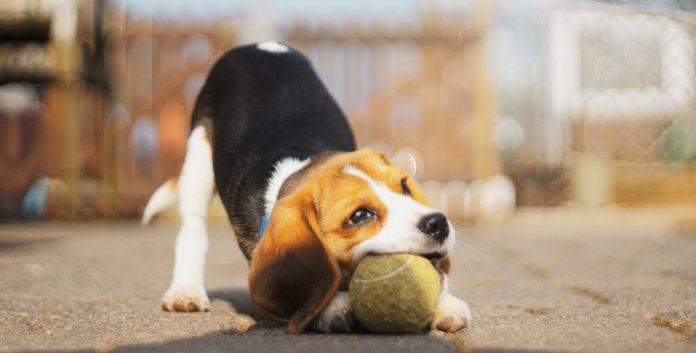 ТОП-5 найрозумніших порід собак - today.ua
