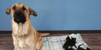 Бездомна собака врятувала від загибелі чотирьох кошенят - today.ua