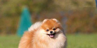 ТОП-10 найкрасивіших собак - today.ua