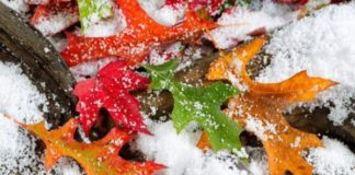 Погода на 18 листопада: синоптики розповіли, в яких областях вдарять морози - today.ua