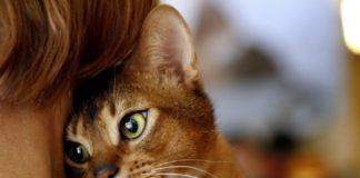 Як кішки лікують хвороби і знімають стрес: унікальні факти - today.ua