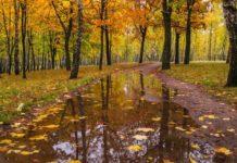 Погода на 15 листопада: синоптики розповіли, де пройдуть дощі - today.ua