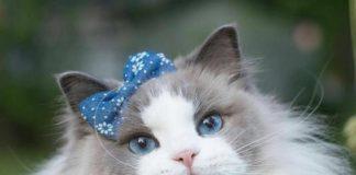 Найкращі породи котів для кожного знака зодіаку - today.ua
