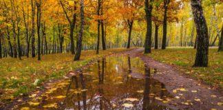 """Погода на 15 листопада: синоптики розповіли, де пройдуть дощі"""" - today.ua"""