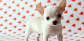 Лучшие породы собак для каждого знака зодиака - today.ua